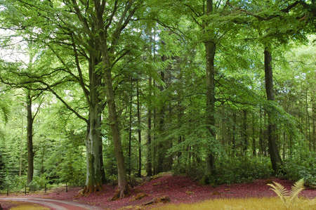 Green forest and road in the Highlands Stock Photo - 803484