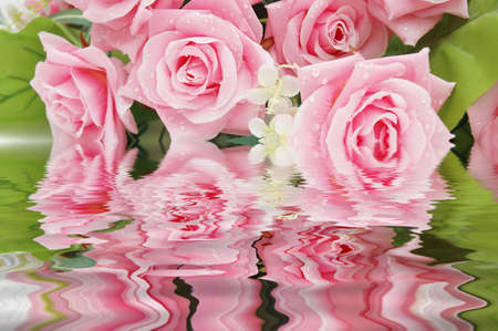 Pink Roses  and their reflection in the water photo