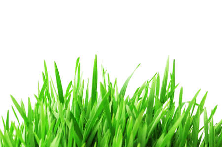 front or back yard: Green grass isolated  on the white background