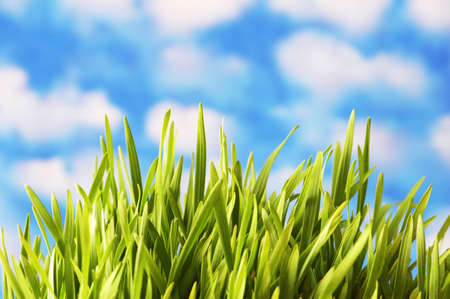 Green grass against the bright  blue sky Stock Photo - 833691