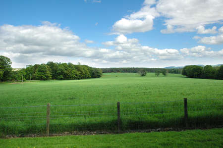 Landscape with green grass and blue cloudy sky photo