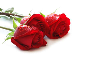 Three red roses with water drops  isolated on white photo
