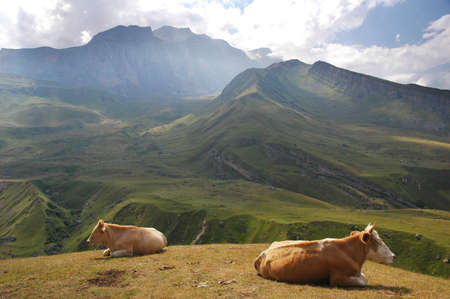 Two cows at the top of hill in  summer Stock Photo - 859262