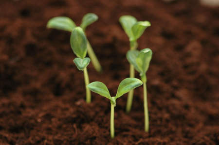 New life concept - seedlings growing  in the soil Stock Photo - 888784
