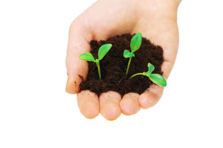 Hands holding seedlings isolated on white background Stock Photo