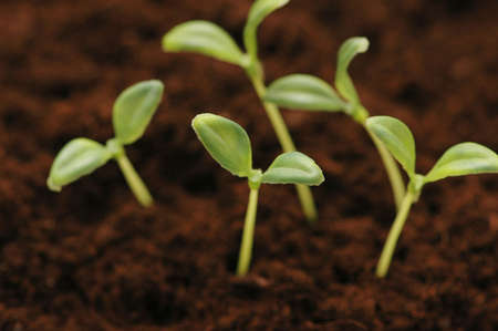 New life concept - seedlings growing in the soil Stock Photo - 927371