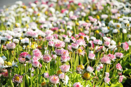Field flowers  on a bright summer day Stock Photo - 927374