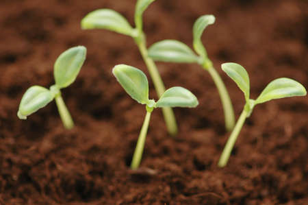 New life concept - seedlings growing in the soil Stock Photo - 956280