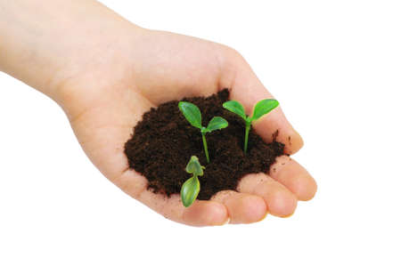 Hands holding seedlings isolated on  white background Stock Photo - 1016351