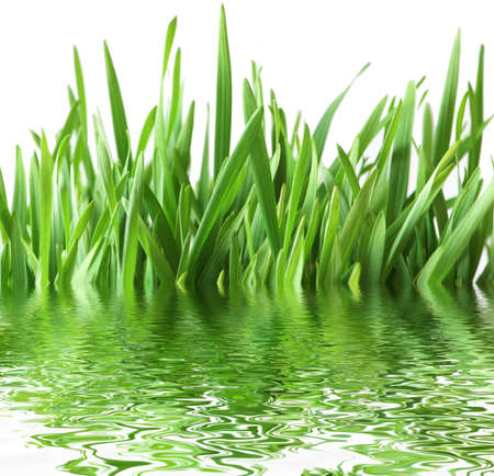Green grass isolated  on the white background Stock Photo - 1215619