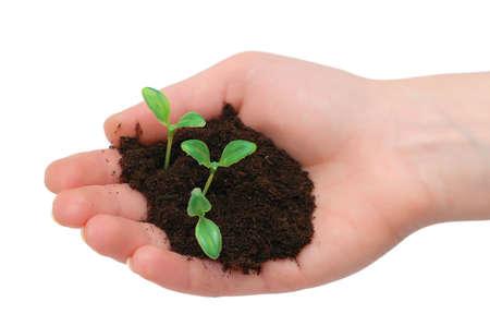 Hands holding seedling isolated on  white background Stock Photo - 1354025