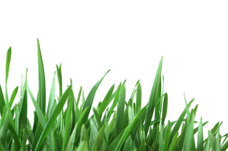 Green grass isolated  on the white background Stock Photo - 1833378