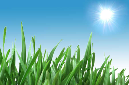 Green grass isolated  on the white background Stock Photo - 1888119