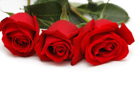 Three red roses isolated on the white photo