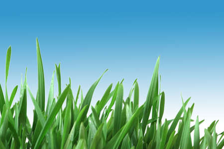 Green grass isolated  on the white background Stock Photo - 1987113
