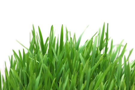 Green grass isolated on the white background photo