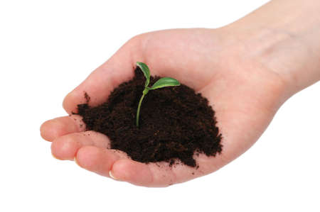 Hands holding seedling isolated on  white background Stock Photo - 2528245