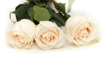 White roses isolated on the white background Stock Photo - 2677325