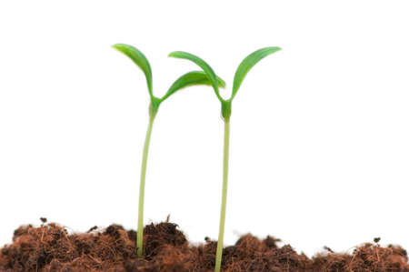 Two seedlings illustrating the concept of new life Stock Photo - 2677321
