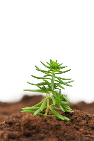 Green seedling isolated on the white background Stock Photo - 2677342