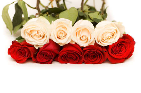 Red and white roses isolated on white photo