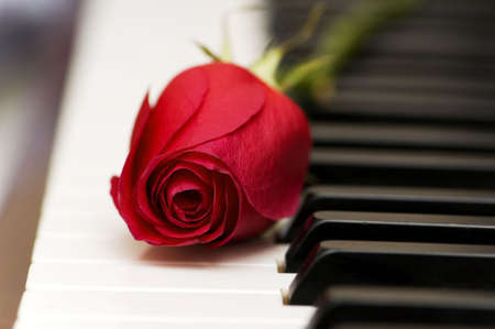 piano: Romantic concept - red rose on piano keys Stock Photo