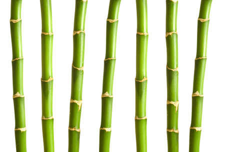 Bamboo branches isolated on the white background photo