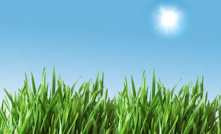 Green glass against the blue sky with sun Stock Photo - 2779713