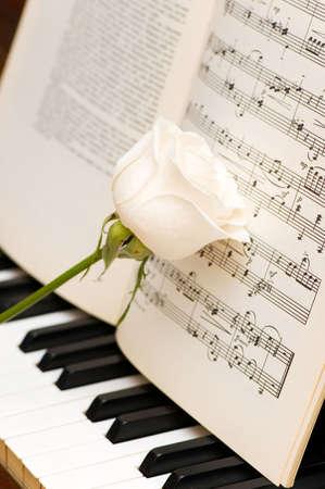 letras musicales: Rosa blanca sobre las hojas de m�sica y piano teclas