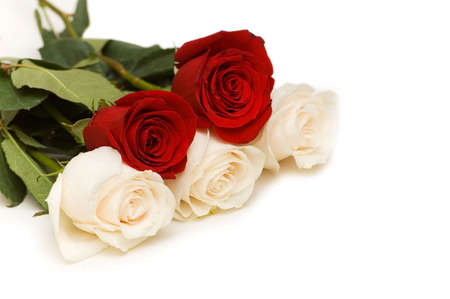 Red and white roses isolated on white Stock Photo - 2996397