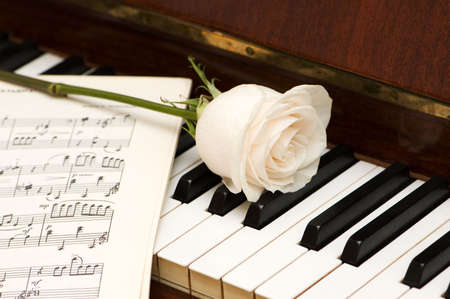 white sheet: White rose over music sheets and piano keys