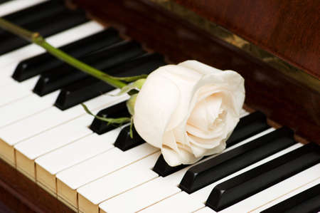Romantic concept - white rose on piano keys photo