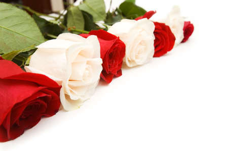 Roses arranged on white background with copyspace Stock Photo
