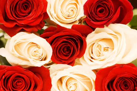 Background of the red and white roses photo