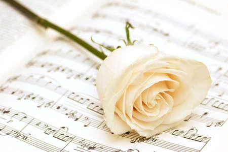 letras musicales: Rosa blanca en la p�gina de notas musicales