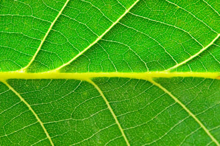 Very extreme close up of green leave photo