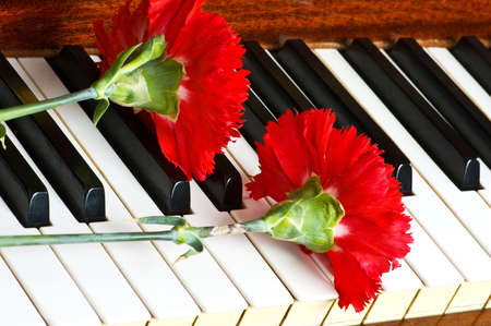 Romantic concept - red carnation on piano keys Stock Photo - 3316560
