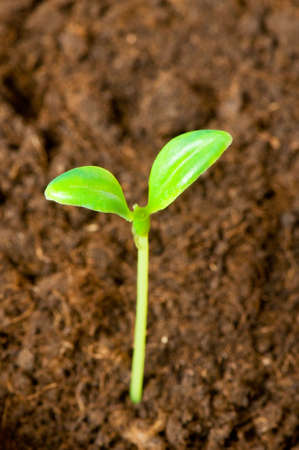 Green seedling growing out of soil - shallow DOF Stock Photo - 3330591