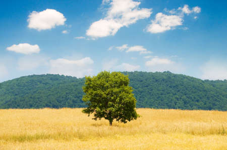 Lonely tree on the wheat field at bright summer day Stock Photo - 3415079