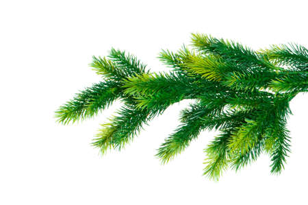 Close up of fir tree branch isolated on white photo