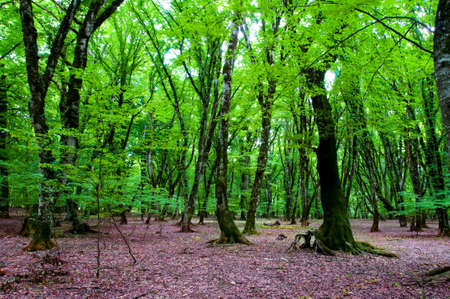 Nature concept - Green forest during bright summer day Stock Photo - 3533279