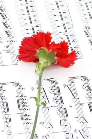 Red carnation flower on musical notes page photo