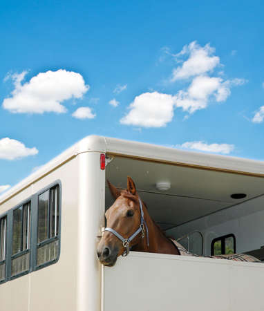Horse in the van on bright summer day