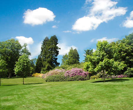 home garden: Trees and lawn on a bright summer day