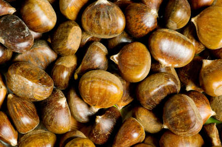 conker: Many chestnuts arranged at the background