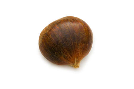 conker: One chestnut isolated on the white background