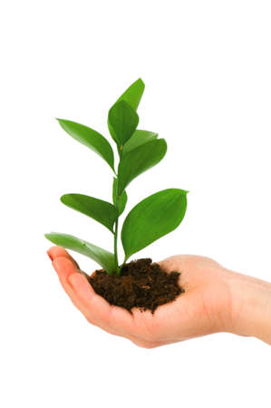 Green seedling in hand isolated on white Stock Photo - 4519578