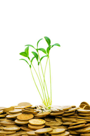Green seedling growing from the pile of coins Stock Photo - 4519630