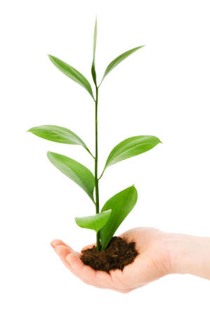 Green seedling in hand isolated on white Stock Photo - 4624059