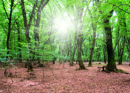 Nature concept - Green forest during bright summer day Stock Photo - 4622544